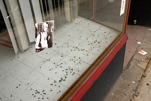 dead flies in store window
